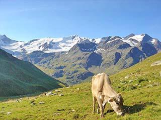Landschaft von Valfurva