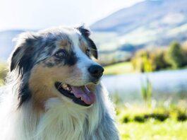Ferienhäuser für Urlaub mit Hund im Valtellina