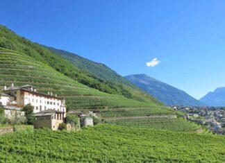 Weinanbaugebiet Valtellina
