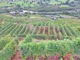 Blick auf Weinterasse im Valtellina